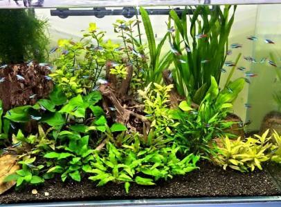 Tengeri és édesvízi akváriumok