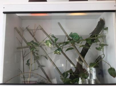 Kaméleon + terrarium