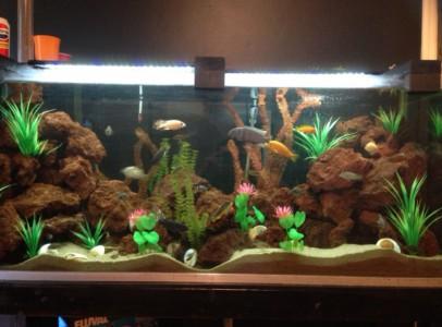 Akváriumi kövek széles választéka