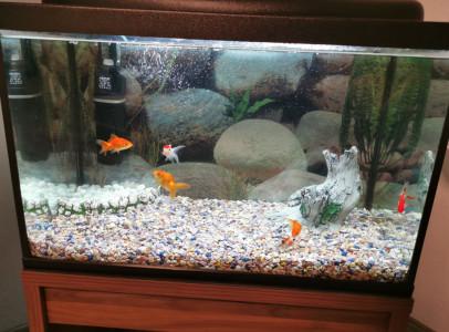 Eladó egy 80literes akvárium