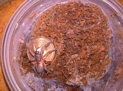 SpiderHajdu