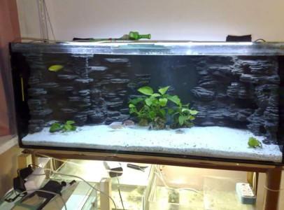 Egyedi akváriumok hátterek