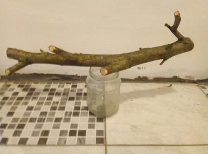 Terráriumi berendezési tárgyak (fa ág) eladó