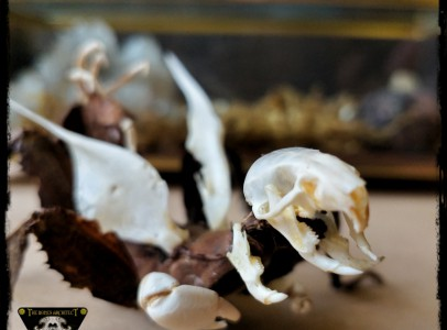 Real bones decorative gifts