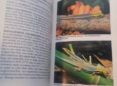 Nappali gekkók- angol nyelvű szakkönyv