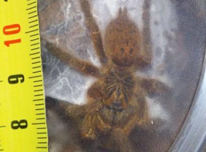 Növendék pókok a TerraPlázára