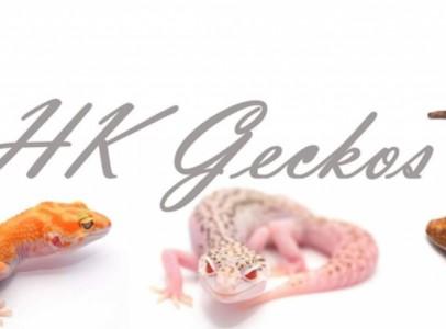 Leopárd gekko - hkgeckos