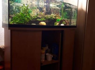 Eladó 110 l akvárium Mexikói Axolotl-okkal