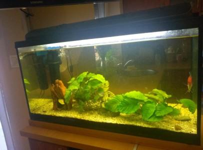 Akvárium (80*35*40cm) eladó