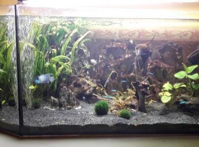 450 literes akvárium,teljes felszereléssel eladó