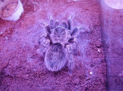 Terrárium pókokkal olcsón!