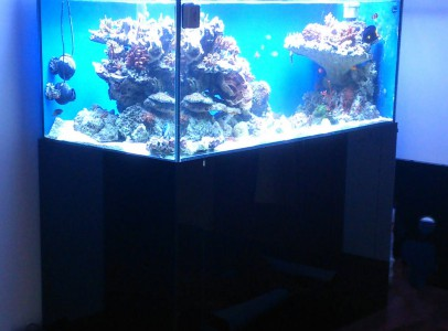 Tengeri akvárium építés