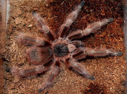 Spiders for terraplaza