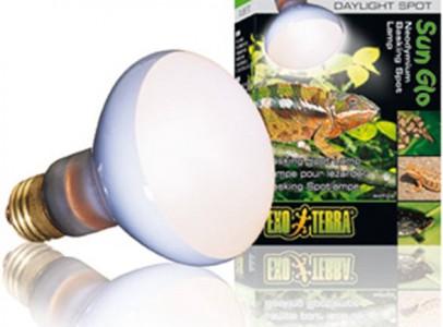 Phelsuma grandis nosteny + terrarium+lampa