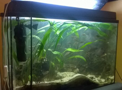 Akvárium 130l Eladó felszereléssel+Kül. szürővel