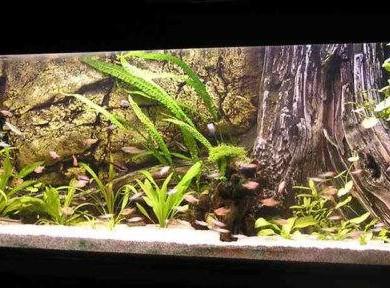 Akvárium háttér bármilyen méretben.