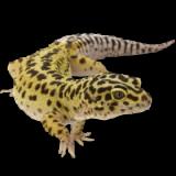 ReptileMagazin