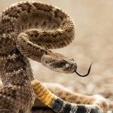-Venom-