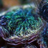 rockpillars