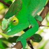 KameleonSziget