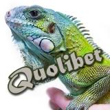 Quolibet